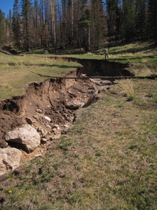 Once the 2011 Las Conchas fire burned this forested region of New Mexico's Valles Grande, water from summer rainstorms tore this ravine through a grassy meadow. The ravine is more than 2 meters deep. (Photo: Caitlin Orem)