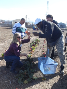 Kelly Young, with UA Cooperative Extension, demonstrates the right way to harvest Swiss chard.