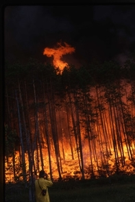 Forest fire rages in Siberia. (Credit: UA Laboratory of Tree-Ring Research)