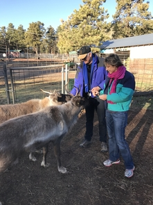 Dieter and Netzin Steklis feed young male reindeer during a recent visit to the Grand Canyon Deer Farm in northern Arizona. (Photo courtesy of Dieter and Netzin Steklis)