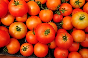 The UA played a part in sequencing the genome of the tomato. Having the genome sequence will allow scientists to locate and identify genes more quickly and improve the crop more rapidly. (Photo by Norma Jean Gargasz/UANews)