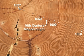 This Douglas-fir sample from the Southwest has annual tree rings dating back to the year 1527. The narrowing of the rings that formed from the 1560s through the 1590s indicates that the tree grew little during the 16th century megadrought. (Photo © Daniel Griffin)