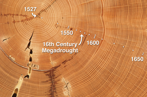 This Douglas-fir sample from the Southwest has annual tree rings dating back to the year 1527. The narrowing of the rings that formed from the 1560s through the 1590s indicates that the tree grew little during the 16th century megadrought. (Copyright Daniel Griffin)