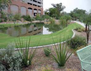 The Highland Parking Garage Basin and Open Space Project incorporates passive water harvesting features in landscape design. (Photo: Grant McCormick/UA Planning, Design and Construction)