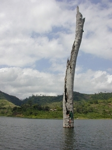 UA researcher Winston Wheeler collects tree cores from a tree partially submerged in Lake Bosumtwi, Ghana. This tree grew at a time of prolonged drought when the lake level was tens of meters lower than today. (Credit: Jonathan T. Overpeck)