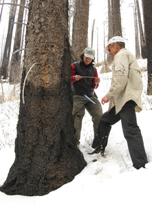 Connie Woodhouse and Mark Losleben of the UA examine a tree-ring core from a drought-stressed Douglas fir tree in the Santa Rita Mountains south of Tucson, Ariz. (Photo credit: Copyright 2009 Daniel Griffin)
