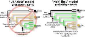 Two hypothetical family trees for HIV/AIDS. Research by Michael Worobey of The University of Arizona and his colleagues has shown that HIV went from Africa to Haiti and then to the U.S. (the family tree on the left) Credit: Michael Worobey, The University of Arizona.