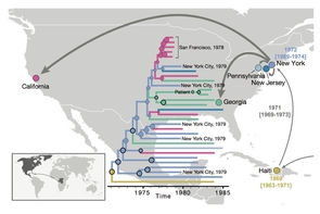 After HIV moved from Africa to the Caribbean, it first spread to New York and subsequently to different locations in the U.S. By constructing evolutionary trees of the various HIV strains as far back as the 1970s, the researchers found evidence that the virus had been circulating under the radar for 10 years before the outbreak in the U.S. was recognized. (Illustration: Worobey et al.)