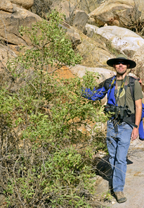 Sky Jacobs poses next to the Buddleia sessiliflora that he and Aaron Flesch discovered in the San Luis Mountains. Jacobs served as a UA research biologist for 13 years. (Photo: Sky Jacobs)