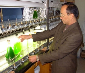 (Click to enlarge) Joel Cuello checks the flow rate of air bubbling through algae growth flasks in his University of Arizona lab.