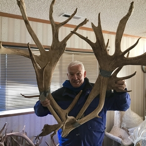 Dieter Steklis holds a set of reindeer antlers, which can weigh up to 50 pounds while developing. (Photo courtesy of Dieter and Netzin Steklis)