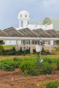 A traditional open-sky garden is situated next to an agrivoltaics system, in which plants are grown under solar photovoltaic panels. The study was conducted at the Biosphere 2, which can be seen in the background. (Photo: Patrick Murphy/University of Arizona)