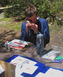 At the field-study site in Giant Sequoia National Monument in California, Paul Marek assesses predator bite marks on clay models of the millipede Motyxia.