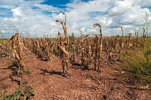 Recent drought has led to crop failure in many states across the Southwest, most notably in Texas and California. Warmer temperatures in the future are projected to prolong and intensify droughts in the region. (Photo: USDA)