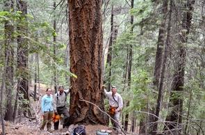 Vanessa Buzzard, Sean Michaletz and Brian Enquist collecting data on Mount Lemmon. (Courtesy: Brian Enquist)