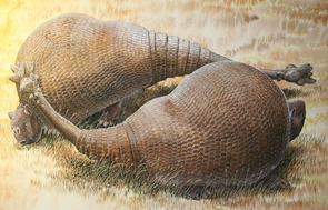 An illustration of two male glyptodonts (Doedicurus clavicaudatus) facing off: The massive, club-shaped tails were probably used more for intraspecific combat than defense against predators. (Illustration: © Peter Schouten)