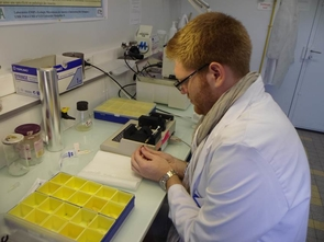 Microbiology student John McMullen is conducting research at the University of Montpellier II, in Montpellier, France.