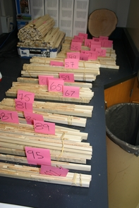 Tree cores are mounted on sticks to make the cores easier to handle for measuring the annual growth rings. The numbers on the pink tags indicate the county in which the cores were taken. (Photo: John D. Shaw, U.S. Forest Service)