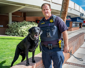 Kyle Morrison and his partner, Toby, are an explosive detection team with the UA Police Department. The cognitive abilities that predict success in detection dogs are different from those that seem important in assistance dogs. (Photo: Bob Demers/UANews)
