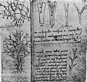 (Click to enlarge) Leonardo Da Vinci was the first to accurately describe trees' branching rules. He created sketches of trees in a page of his notebook based on the rule that daughter branches and twigs have the same combined cross-sectional area as the branch from which they originated. (Photo courtesy of Brian Enquist)