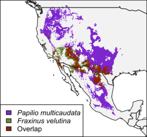 A map made by students showing the range of Arizona's state insect, the two-tailed swallowtail butterfly, and its host plant, velvet ash. The butterfly's range is shown in purple, the plant's range is shown in green, and the overlap of the two ranges is shown in brown.