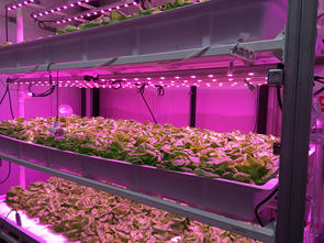 The University of Arizona's Controlled Environment Agriculture Center (Photo courtesy of CEAC)