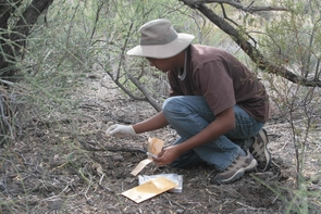 Ashwin Naidu collects puma scat for genetic analysis.