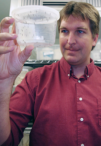 Michael Riehle, holding genetically altered mosquitoes, and his team work in a highly secure lab environment to prevent their study subjects from escaping. (Photo credit: University Communications; Click to enlarge)