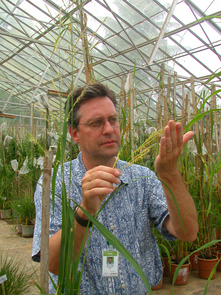 (Click to enlarge) Arizona Genomics Institute director Rod A. Wing is pictured here with rice. Wing, who led UA's effort in sequencing the rice genome in 2005, led UA scientists in sequencing the corn (maize) genome.