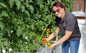 Stacy Tollefson, project and production manager for the greenhouse and a professor of practice in the Department of Biosystems Engineering, tends the crops in the greenhouse atop the UA student union building.