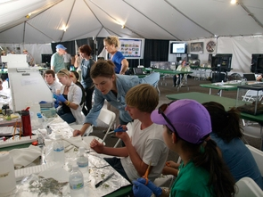 Inside the science tent, high school students prepare the plant samples they collected in the field to be tested for endophytes living in the plant tissue. Photo: (D. Stolte/UANews)