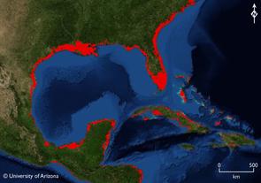 (Click to enlarge) If sea levels rose to where they were during the Last Interglacial Period, large parts of the Gulf of Mexico region would be under water (red areas), including half of Florida and several Caribbean islands. (Photo illustration by Jeremy Weiss)