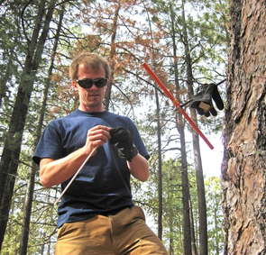 UA tree-ring researcher Daniel Griffin collects a core from the trunk of a ponderosa pine to study the tree's annual growth rings. He measures the width of such rings to study the monsoon rainfall history of the America Southwest. (Image (c) Scott St. George/University of Minnesota)