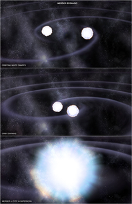 In one of two possible scenarios leading to a Type Ia supernova, two white dwarf stars orbit each other and lose energy via gravitational radiation, eventually resulting in a merger between the two stars. Because the total mass of this merger exceeds the weight limit for a white dwarf, the merged star is unstable and explodes as a Type Ia supernova. (Illustration: NASA/CXC/M.Weiss)