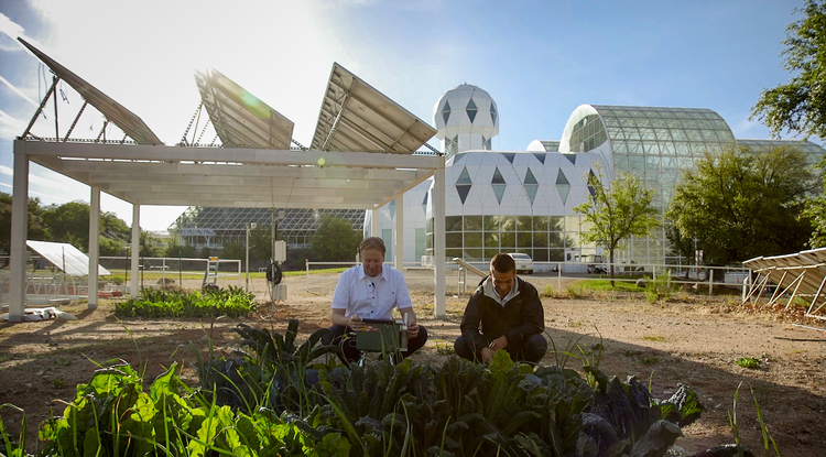 Researcher Greg Barron-Gafford and undergraduate research assistant Dan Blackett tend to the greens at the agrivoltaic test site st Biosphere 2. (Photo: Bob Demers/UANews)
