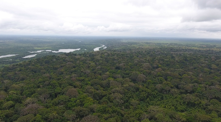 Aerial view of the Ceibal region in Guatemala. Lasers powerful enough to penetrate the dense jungle canopy allowed archaeologists to accurately map the ground surface below. (Photo courtesy of Takeshi Inomata)