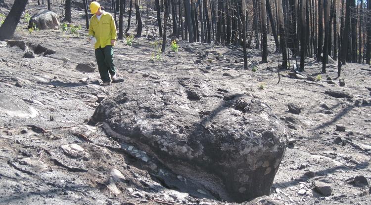 Jon Pelletier, a UA professor of geosciences, walks through the forest on Cerro del Medio, a mountain in New Mexico's Valles Grande, after the 2011 Las Conchas fire. (Photo: Caitlin Orem)