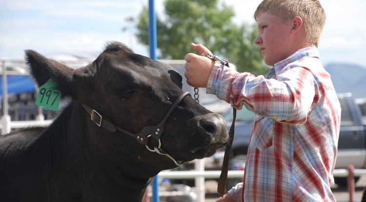 A Graham County youth with his heifer awaiting auction at the county fair.