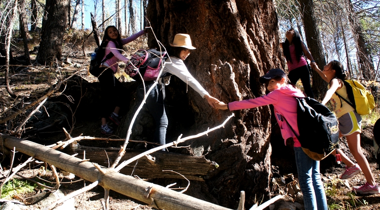 """Students link hands around the """"grandfather tree,"""" an ancient pine tree near the Mt. Lemmon SkyCenter. (Photo by Pacifica Sommers)"""