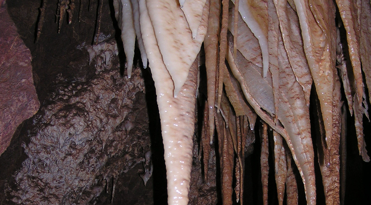 UA scientists have discovered diverse communities of bacteria, fungi and archaea on the surface of Kartchner stalactites that live off of nutrients from the cave drip water and  contribute to the growth of the cave formations through calcite precipitation. (Photo: Bob Casavant/Arizona State Park Service)