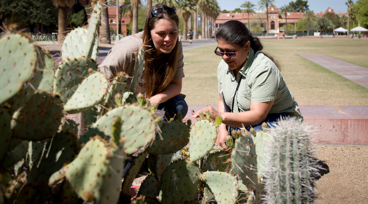 Alyssa Rosemartin (left) and teacher Martha Valencia from Puebla, Mexico, examine buds on a prickly pear on the UA campus. The USA-NPN recently worked with teachers from Mexico participating in the College of Education's Project SEED on a phenology and citizen science experience. (Image: Brian Forbes Powell)