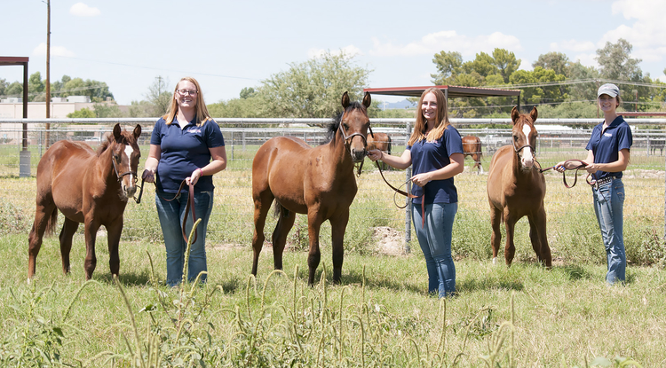 Equine sciences students gain valuable hands-on experience working with young horses at the UA Equine Center. From left are junior Zoie Spurr, senior Norielle Ziemann and junior Megan Hanson. (Photo: Stacy Pigott/UANews)