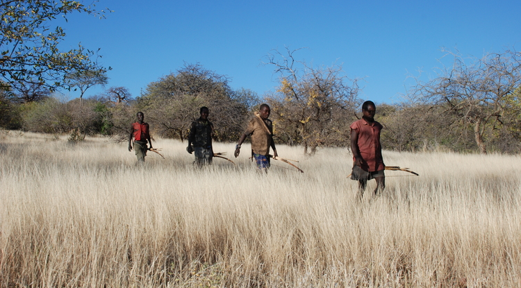 The Hadza people of Tanzania wore wristwatches with GPS trackers that followed their movements while hunting or foraging. Data showed that humans join a variety of other species including sharks and honeybees in using a Lévy walk pattern while foraging. (Photo by Brian Wood/Yale University)