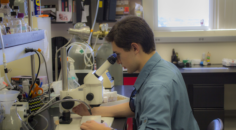 Jeremiah Pate inspects fruit flies under a microscope in the Zarnescu lab. (Photo: Emily Walla/UANews)