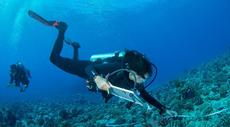 Julianna Renzi will use the NSF Graduate Research Fellowship to continue her graduate studies focusing on how humans impact the ecology of marine ecosystems, with a particular focus on coral reefs and salt marshes.