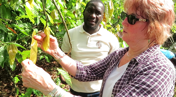 Judy Brown, a plant virologist in the UA's College of Agriculture and Life Sciences, is working with African scientists and farmers to create greater awareness of a disease that is killing cacao trees. (Photo courtesy of Judy Brown)