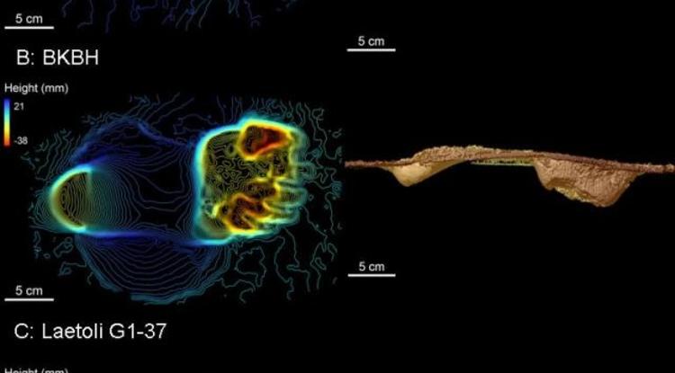 Evidence Indicates Humans' Early Tree-dwelling Ancestors