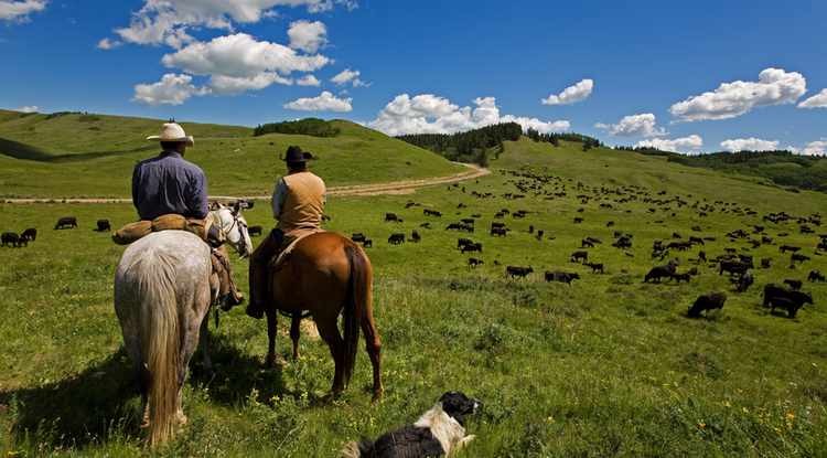 "The new, publically available resources provide a comprehensive view of rangelands, ""much of it not previously easily available to practitioners or the public, especially those living in remote locations,"" said George Ruyle, the Marley Endowed Chair for Sustainable Rangelands Stewardship in the UA School of Natural Resources and the Environment."