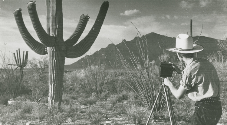 A young man photographs a saguaro cactus outside of the Herbert residence in Tucson. (Photo courtesy of the Arizona Historical Society)