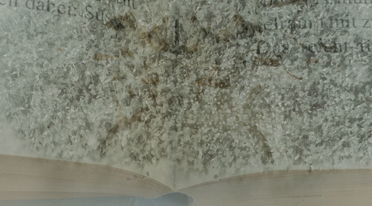 Without careful conservation, problems such as mold would easily damage the Folio. (Photo illustration: Gianna Biocca/UA Office for Research & Discovery)